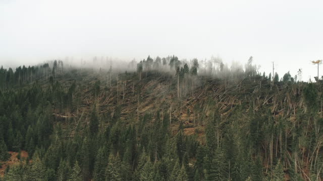 forest destruction and low level clouds shot by drone, dolomites, italy - condition stock videos & royalty-free footage