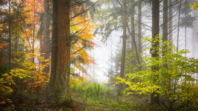 秋の森 - 追跡ショット - dolly shot点の映像素材/bロール