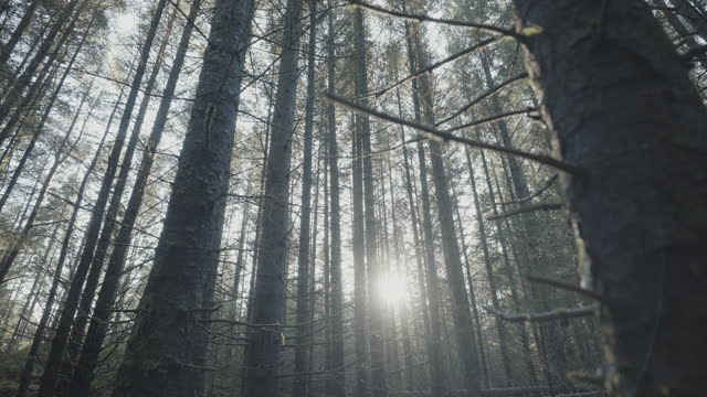 森林生態系:春の間に森林の屋外で、雪が溶けた後 - カバノキ点の映像素材/bロール