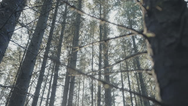 vídeos y material grabado en eventos de stock de ecosistema forestal: al aire libre en el bosque durante la primavera, después de que la nieve se derritiera - the nature conservancy