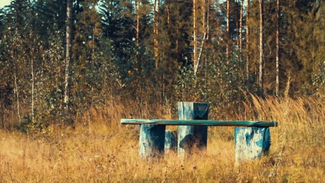 vídeos y material grabado en eventos de stock de borde del bosque en el día de septiembre - pinar