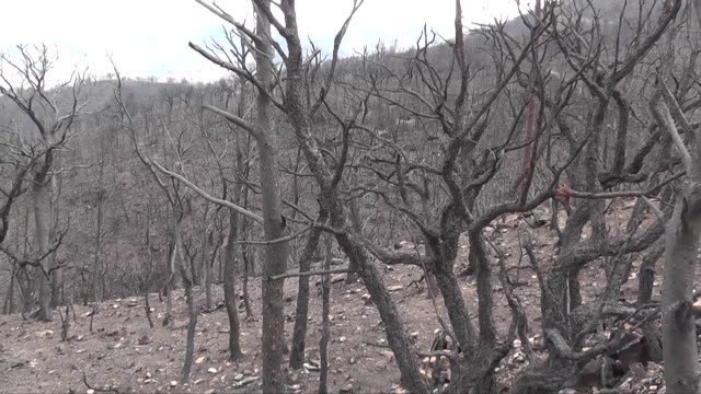 Forest Fire Aftermath Spanish Province Of Granada Stock Footage