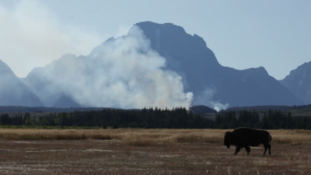 forest fire and bison in grand tetons np wyoming - mt moran stock videos & royalty-free footage