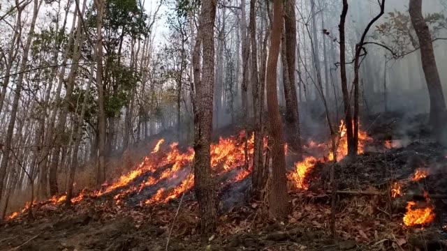vidéos et rushes de feu de forêt. arbres brûlés après les feux de forêt, la pollution et beaucoup de fumée - brasier