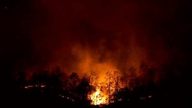 ws forest fire, chiangmai, thailand - burnt stock videos & royalty-free footage