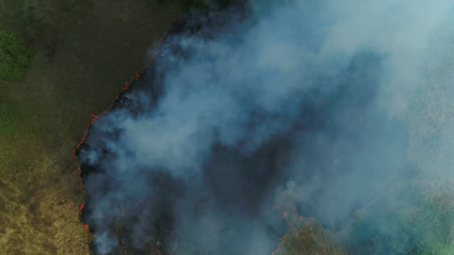 forest fire. grass is burning. aerial drone shot - burning stock videos & royalty-free footage