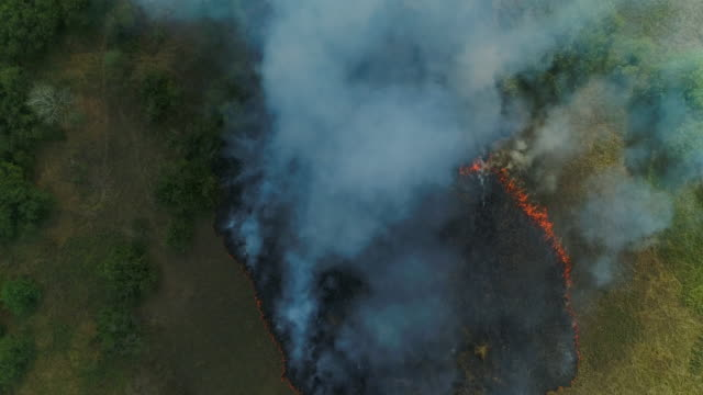 forest fire. grass is burning. aerial drone shot - bog stock videos & royalty-free footage