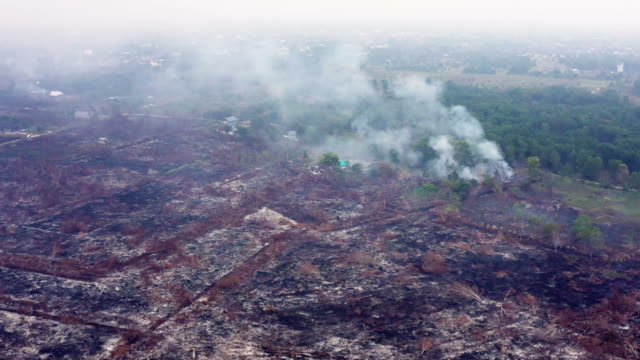 forest fire in the island of borneo kalimantan in indonesia - rainforest stock videos & royalty-free footage