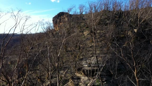 vidéos et rushes de forest fire, moving down into dead burnt tree canopy in valley - image contrastée