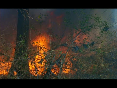 forest fire, nagarahole, southern india - thick stock videos & royalty-free footage