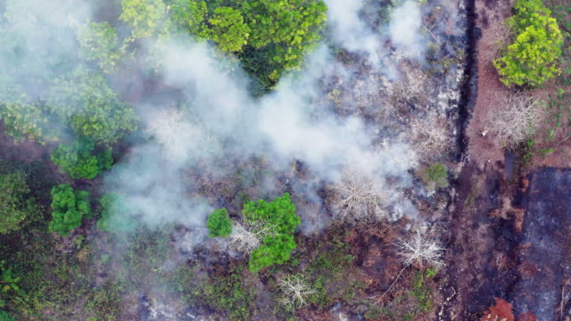 forest fire on the island of borneo kalimantan in indonesia - fuoco video stock e b–roll