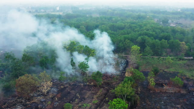forest fire on the island of borneo kalimantan in indonesia - rovina video stock e b–roll