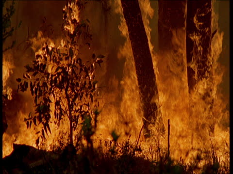 forest fire rages through australian bush - fire natural phenomenon stock videos & royalty-free footage