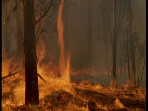 forest fire raging through australian bush, firestorm vortex swirling amongst trees - twisted stock videos & royalty-free footage