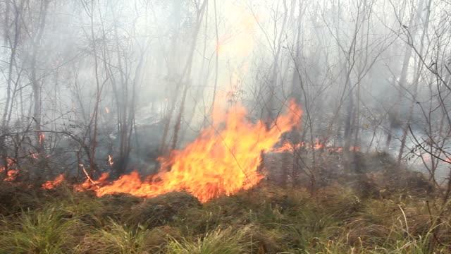 incendio boschivo - incendio video stock e b–roll