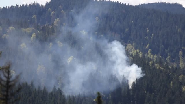 forest fire - black forest stock videos & royalty-free footage