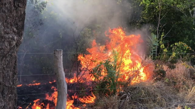 """forest fires burning in the amazon rainforest - """"bbc news"""" stock videos & royalty-free footage"""