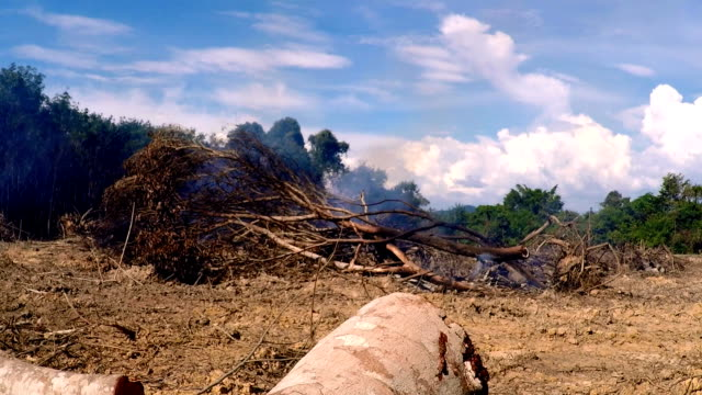regenwald-abholzung-smog der waldbrände - zerstört stock-videos und b-roll-filmmaterial