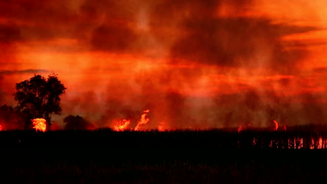 forest fires - forest fire stock videos & royalty-free footage