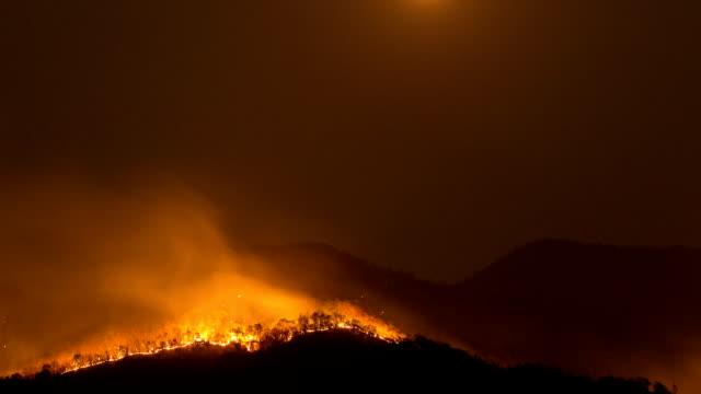 vidéos et rushes de les feux de forêt. - brasier
