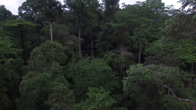 forest floor to forest canopy reveal - malaysia stock videos & royalty-free footage