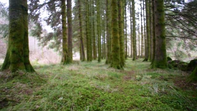 forest floor walk - david johnson stock videos & royalty-free footage