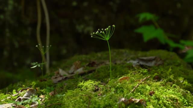 森林の花 - 苗点の映像素材/bロール