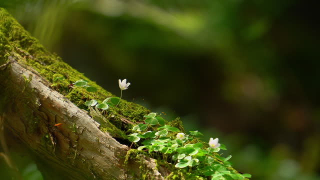 forest flowers - muschio video stock e b–roll