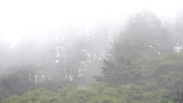 vídeos de stock, filmes e b-roll de floresta de neblina - sequoia sempervirens