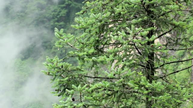 forest fog - tibetan plateau stock videos & royalty-free footage