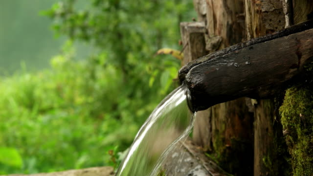 forest fountain water