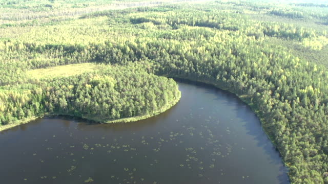 Forest from helicopter
