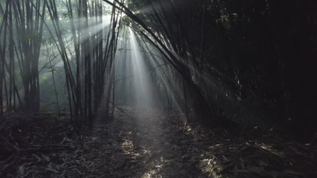 forest glade / bali, indonesia - bamboo plant stock videos & royalty-free footage