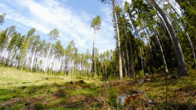 stockvideo's en b-roll-footage met bos glade in zonnige dag - achterstevoren