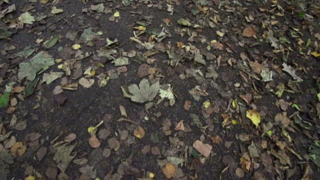 定常キャム:林の接地 - 茶色点の映像素材/bロール