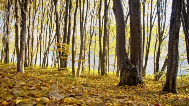 slo mo の森に覆われた敷地の秋の落ち葉 - 茶色点の映像素材/bロール