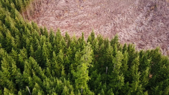 forest harvesting in the pacific northwest - aerial view - ceppaia video stock e b–roll