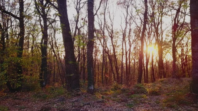 vídeos y material grabado en eventos de stock de bosque en otoño durante una puesta de sol mágica - back lit