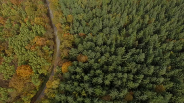 forest in autumn in isere, france – aerial view by drone - rhone alpes stock videos & royalty-free footage