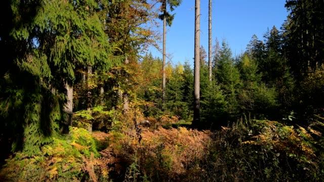 vídeos y material grabado en eventos de stock de forest in autumn - baden wurttemberg