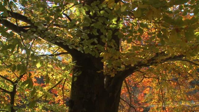 HD クレーン:秋の森