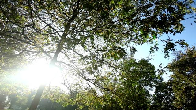 vídeos y material grabado en eventos de stock de bosque en otoño con la luz del sol - mancha solar