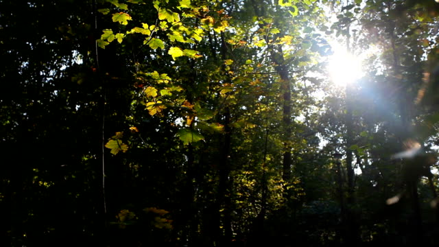 Forest in Autumn with sunlight