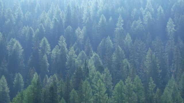 vídeos y material grabado en eventos de stock de forest in back lit. misurina, dolomites, veneto, italy. - back lit