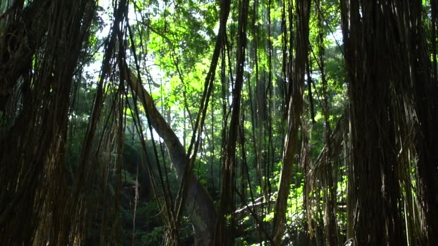 forest in bali, indonesia - ubud district stock videos & royalty-free footage