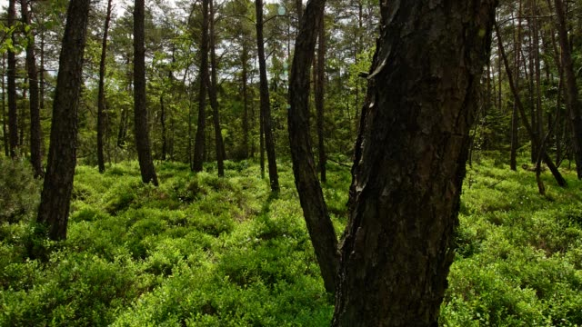 forest in early summer - morning stock videos & royalty-free footage