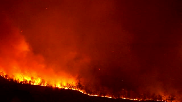 Forest in Flames on hill side