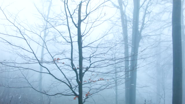 forest in fog - bare tree stock videos & royalty-free footage