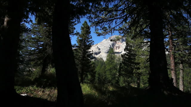 forest in high mountains tracking shot - trentino alto adige stock videos & royalty-free footage