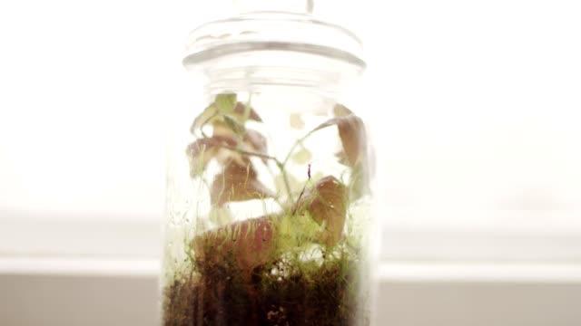 diy forest in jar. - jar stock videos & royalty-free footage